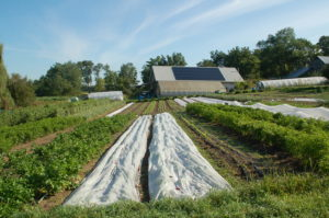 Earth cooled passive solar straw bale barn with attached greenhouse at Four Winds Farm