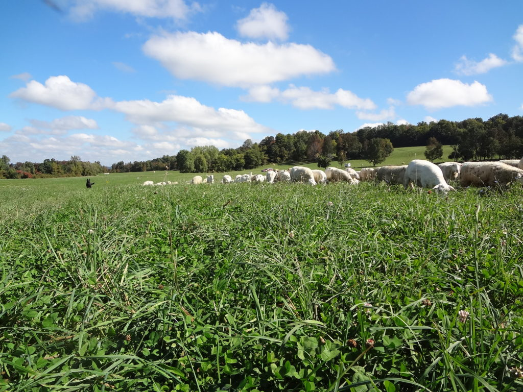 A fine day for grazing.
