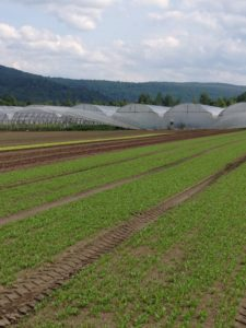 Pete's Greens purchased more farmland dedicated to growing crops for grocery stores.