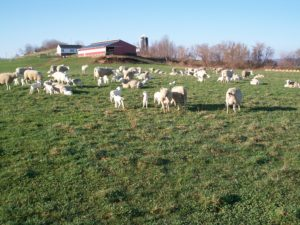 Copper is an essential element for proper development of sheep.