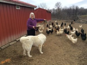 New Pen...Elaine with Great White Pyrenees Guard Dog