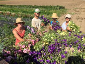 Old Friends Farm is owned and operated by Missy Bahret and Casey Steinberg, and is located in Amherst, Massachusetts. Cut flowers are one of their cash crops.