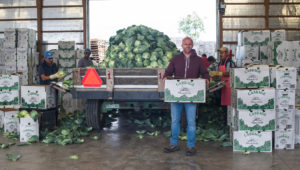 truck filled with cabbage