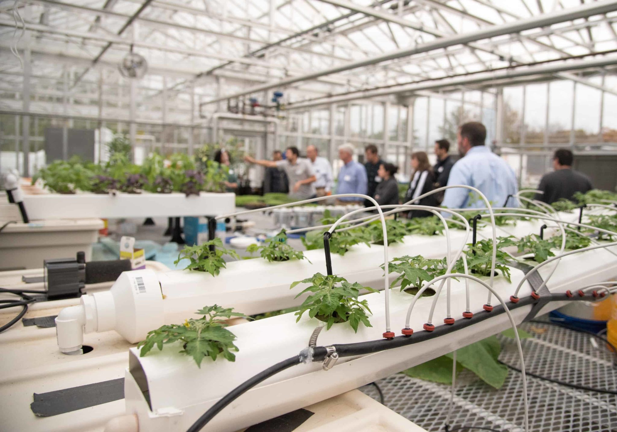 hydroponics system in a greenhouse