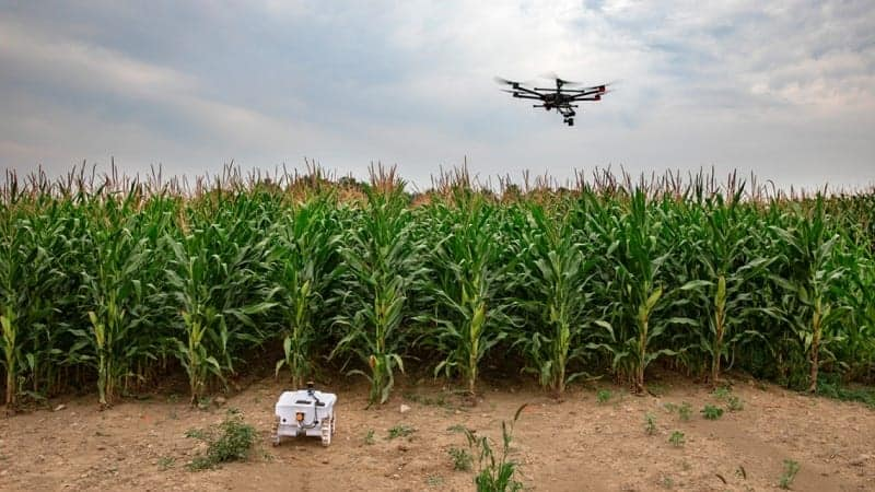 Drone hovers over a cornfield