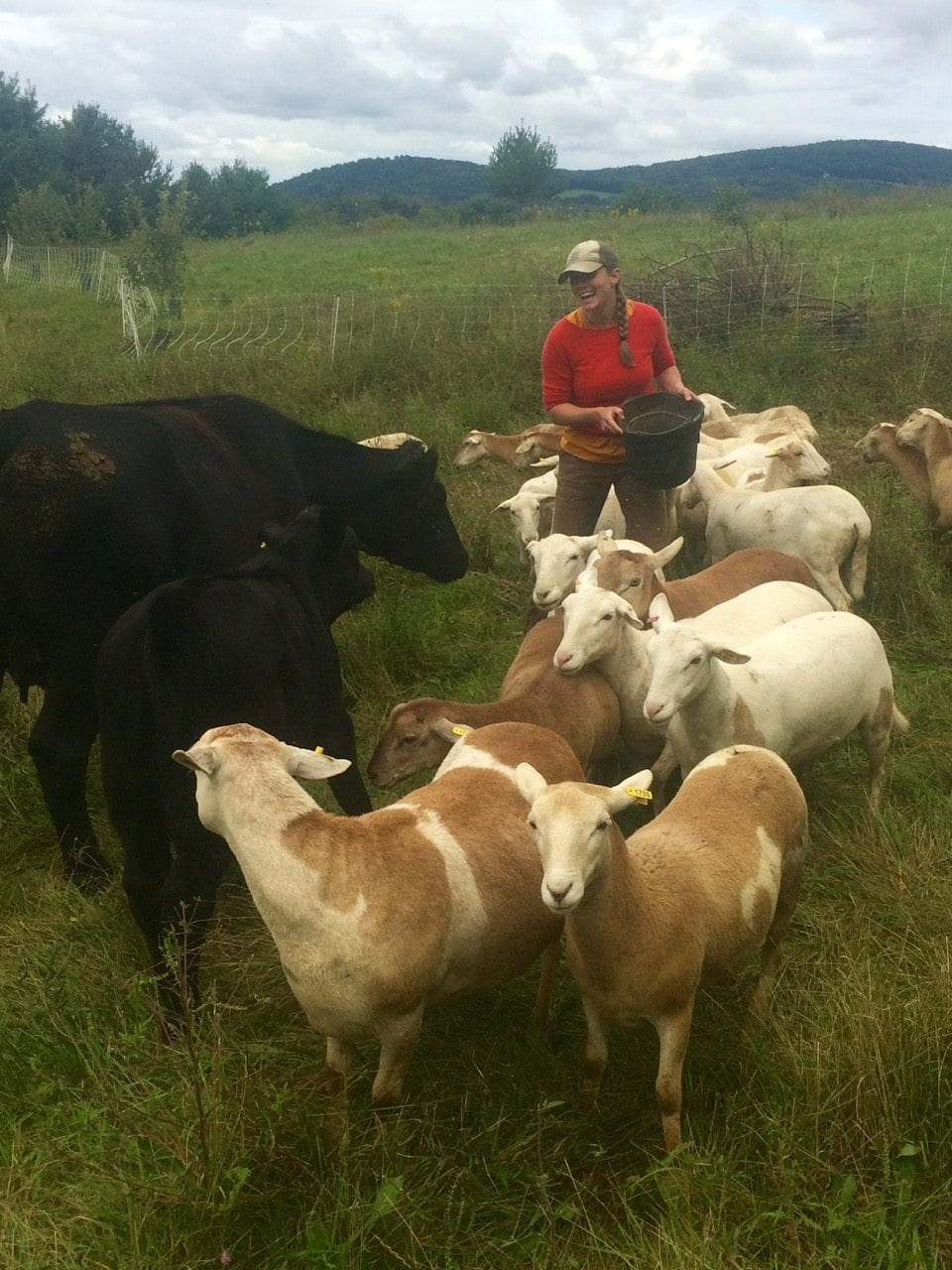 a person stands in a field holding a bucket, surrounded by cattle and goats