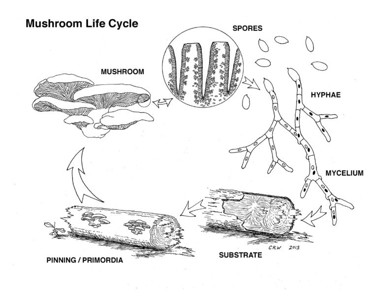 Figure 7 LifeCyclePoster