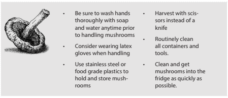 Be sure to wash hands thoroughly with soap and water anytime prior to handling mushrooms. Consider wearing latex gloves when handling. Use stainless steel or food grade plastics to hold and store mushrooms. Harvest with scissors instead of a knife. Routinely clean all containers and tools. Clean and get mushrooms into the fridge as quickly as possible.