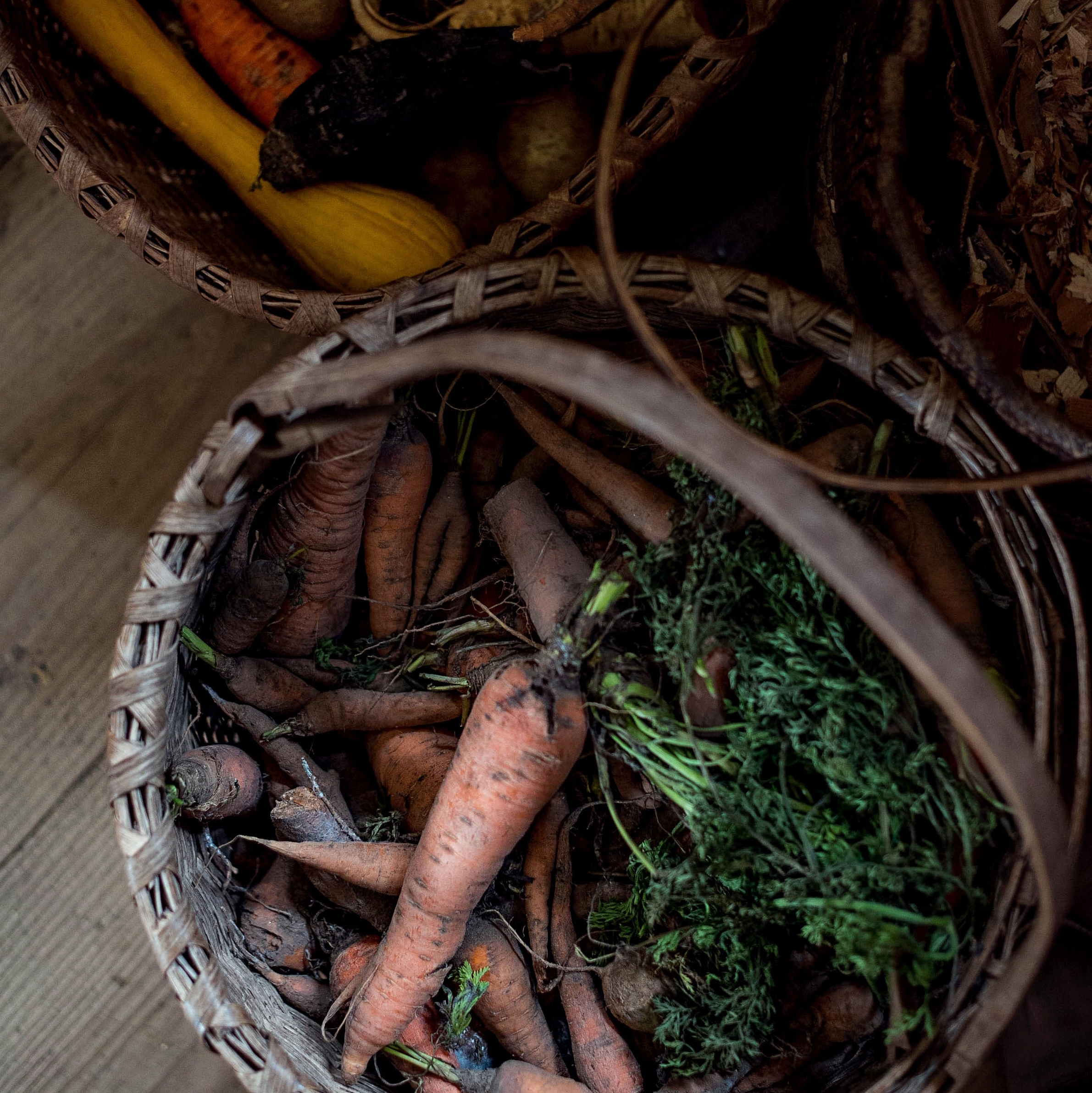 carrot-harvest-basket-insta