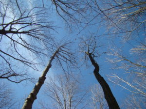 A view of a sparse forest canopy from below.