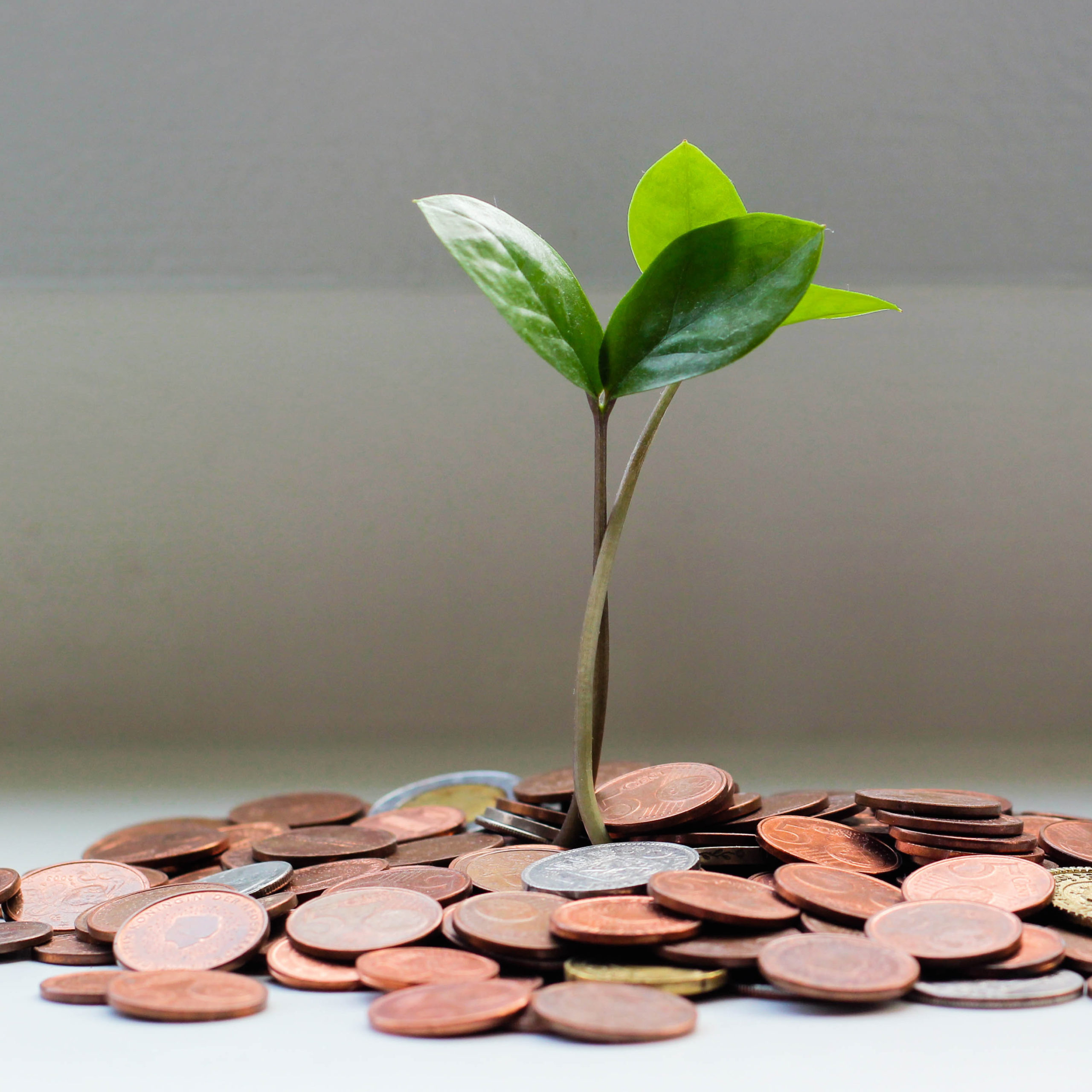 covid-finance-plant-coins