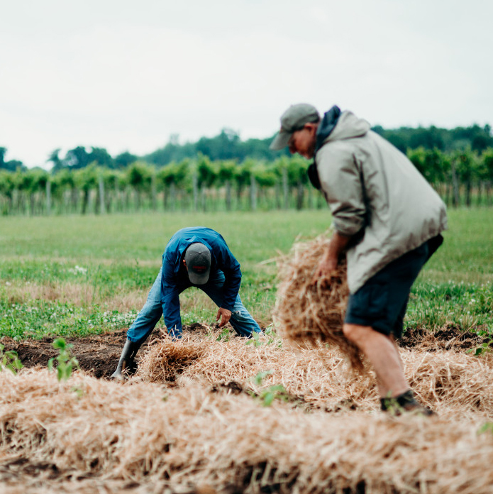 farm-work-labor-rows-hay-cals-insta