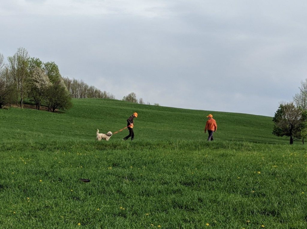 Two children walk a Great Pyrenees puppy across a field.
