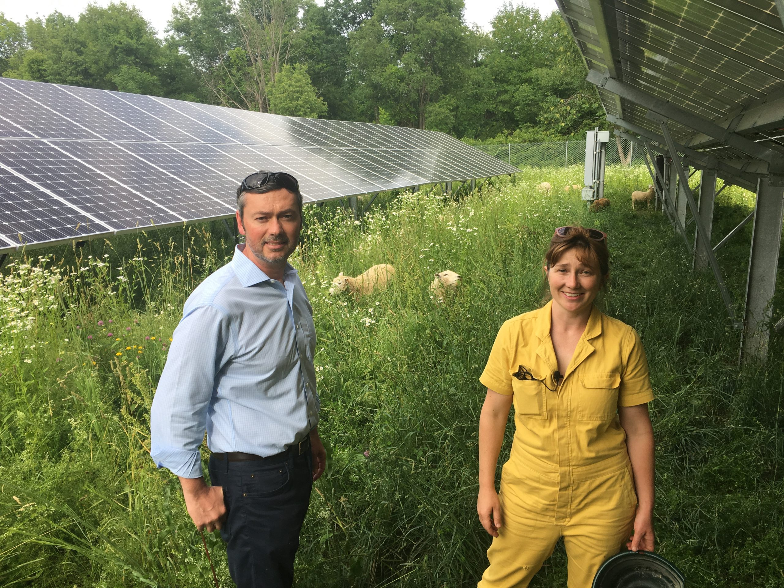 Ashley Bridge on thesolarsite she manages, with her boss from thesolarcompany. Solar panels, grass, and sheep grazing in the background