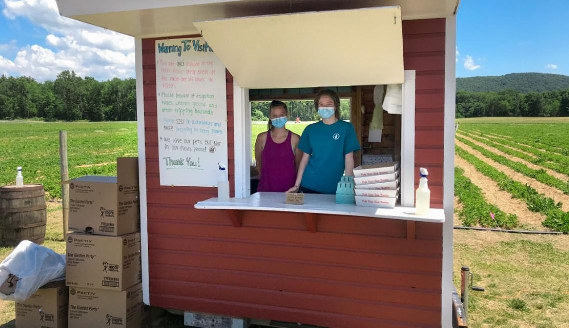 Two employees of Hand Melon Farms in Greenwich, NY, provide flats and pints for picking blueberries – and offer NYS sanitizer for safety.