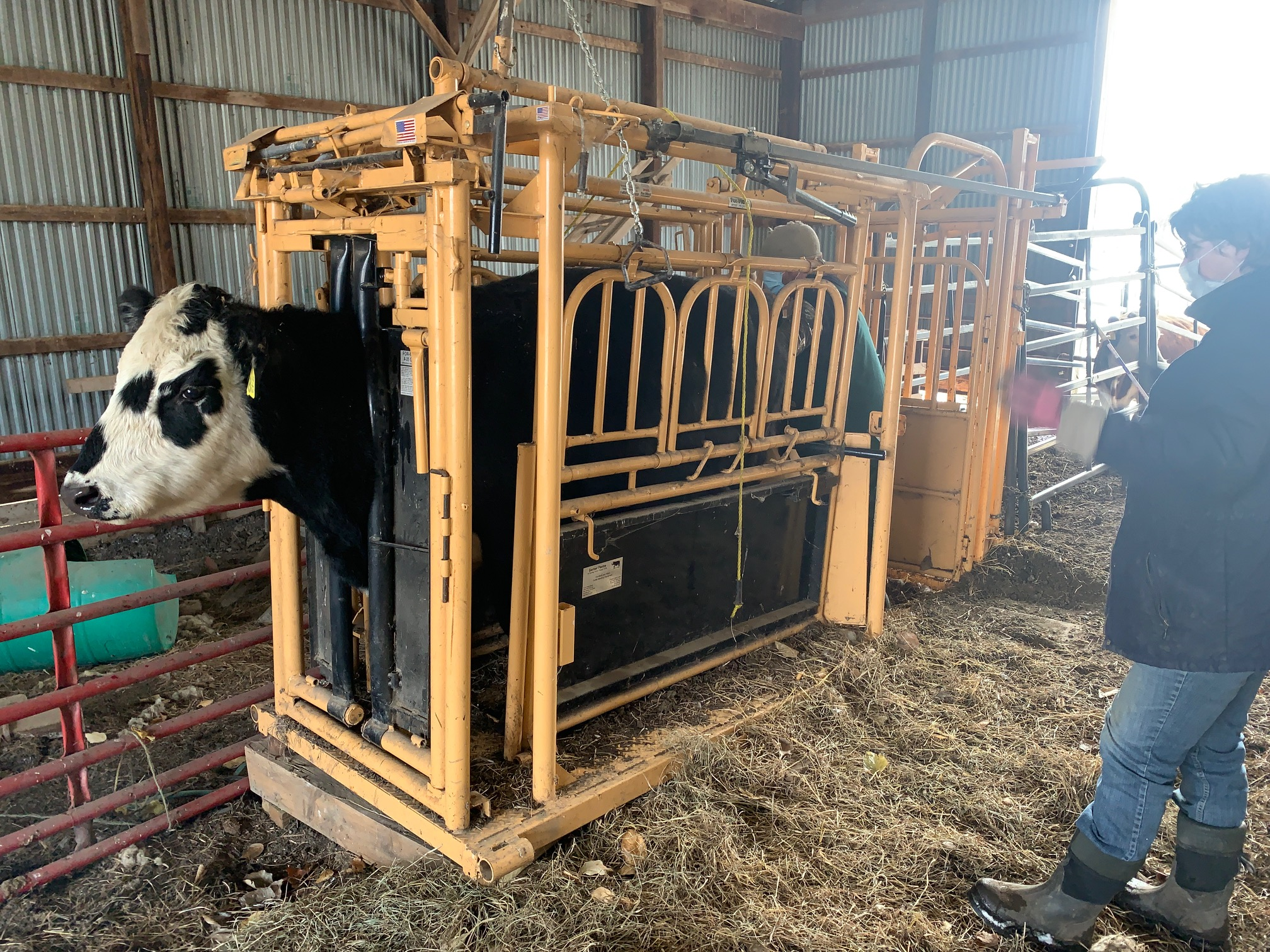A squeeze chute that allows the safe and efficient handling of animals