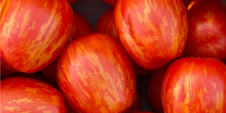 An image of the Cherry Ember tomato shows bright red skin with yellow stripes.