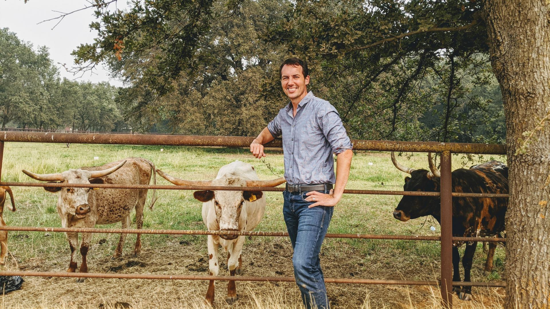 Benjamin Houlton, the Ronald P. Lynch Dean of the College of Agriculture and Life Sciences, stands by some cows in a pasture.