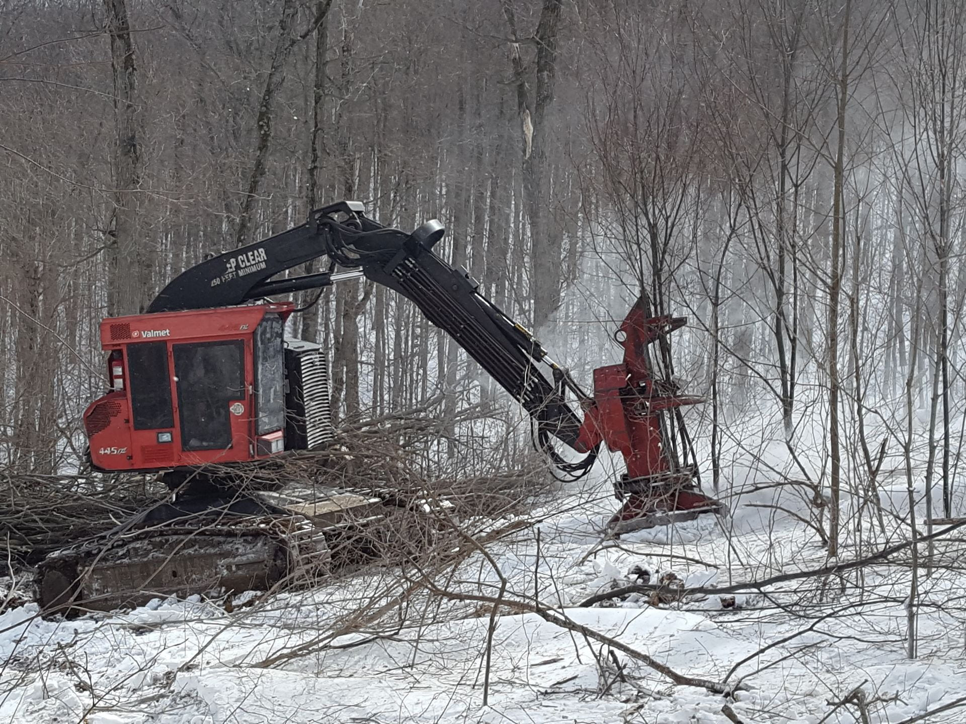 A feller-buncher can efficiently clear the understory, although it is most commonly used in harvesting larger trees. The cutting head allows for stems to be bunched at specific locations.