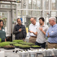 The Cornell CEA Advisory Council, which was formed in 2015 to expand the retail and food service markets for products grown using CEA, hosted on campus more than 80 entrepreneurs and stakeholders from across the Northeast to discuss the state of the indoor farming industry, urban agriculture, supermarket trends and new technology. Above, Doctoral student Jonathan Allred, center, leads a tour of Cornell greenhouses in November. (Photo: R.J. Anderson / Cornell Cooperative Extension)