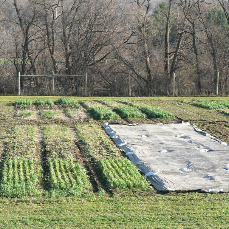 Tarps on Permanent Beds